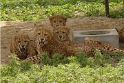 零距离亲近动物游上海野生动物园,住周边上海柏思特酒店,自选主题亲子房~