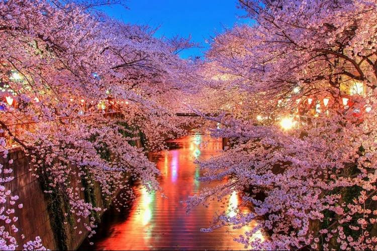 日本东京5/6日自由行+只含机票酒店+全程自由活动+正点航班+五星级航空公司
