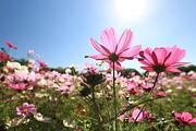 休闲度假入住惠州永记生态园度假酒店,游永记生态园,观浪漫花海