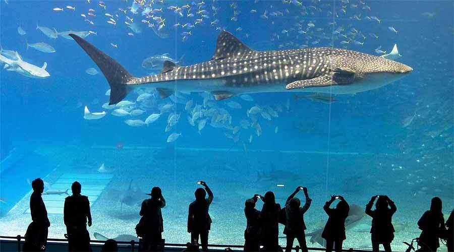 曼谷暹罗海底世界+杜莎夫人蜡像馆
