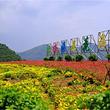 中仙旅游· 长泰古山重+十里蓝山+玛琪雅朵花海纯玩一日游