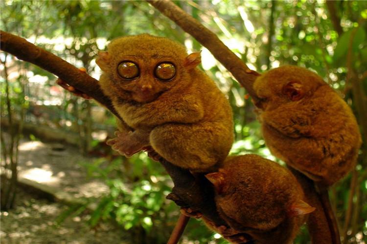 宿务薄荷②菲律宾✈文艺海岛自由圣地巧克力真香山✈眼镜猴沙丁鱼风暴麦哲伦十字架
