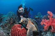 天天发团  巴厘岛蓝梦岛一日游  免费接送,畅玩6大水上项目、浮潜等