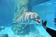 暑你会玩|广州+珠海双长隆|海洋王国+水上乐园+野生动物园+欢乐亲子4日游
