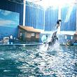蓬莱海洋极地世界纯玩一日游 天天发团 市内火车站酒店免费接