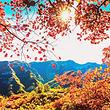 【金秋十色·赏红叶】北京丨十渡乐谷银滩+坡峰岭纯玩一日游