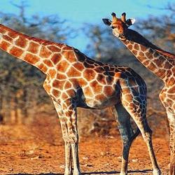 乐和乐都野生动物世界