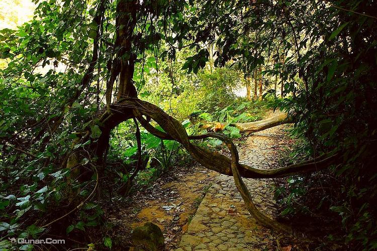 乐土雨林旅游