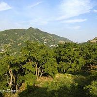 香榧森林公园