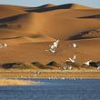 腾格里沙漠天鹅湖