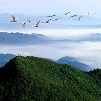 阳明山(原阳岭森林公园)