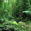 白水岭热带森林