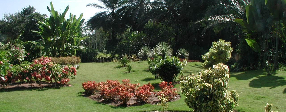 中科院西双版纳热带植物园  第2张