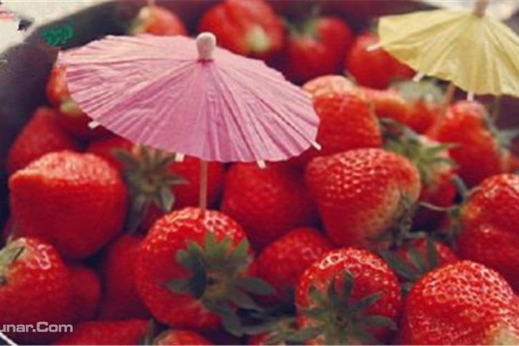 大熊家的草莓店旅游