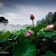 溱湖国家湿地公园