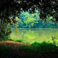 良凤江国家森林公园
