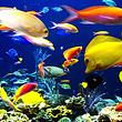 厦门海底世界成人票(早订优惠)