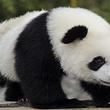 [周末/节假日]北京野生动物园成人票