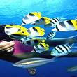 太平洋海底世界成人票(早定优惠)