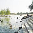 天鹅湖动物乐园