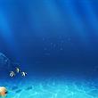 杭州海底世界成人票