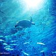 南京海底世界成人票