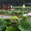 台儿庄运河湿地风景区