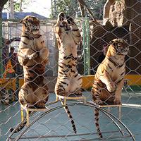 泉州海丝野生动物世界