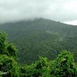 坝王岭森林自然保护区