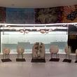 大连贝壳博物馆