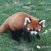爱保野生动物世界