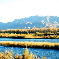 湿地古杨风景区