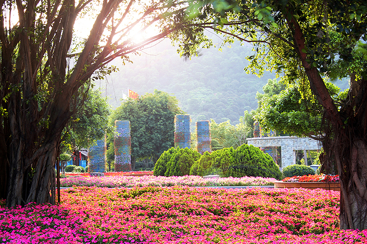 东南花都花博园旅游