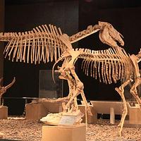 和政古动物化石博物馆