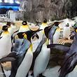 凯利达顿南极水族馆