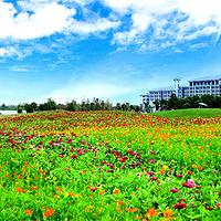 金湾花海景区