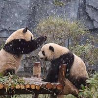 五龙山野生动物王国