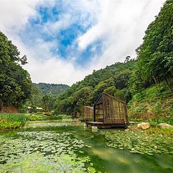 广西高峰森林公园