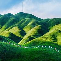 柘荣鸳鸯草场