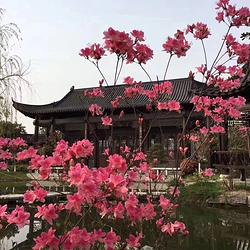 武汉园博园(武汉自然博物馆)