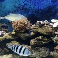 人民公园海洋馆