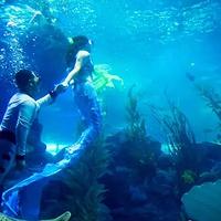 阳泉海洋世界