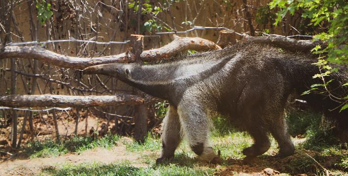 北方森林动物园门票_大连森林动物园门票,大连森林动物园门票预订,大连森林动物园