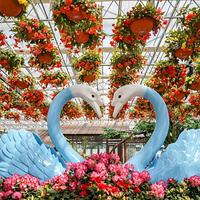 中国杜鹃花博览园