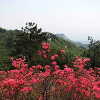 麻城杏花村