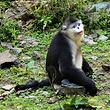 滇金丝猴公园成人票