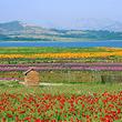 花仙子风景区