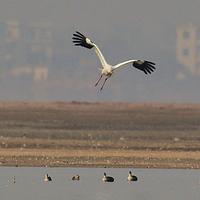 鄱阳湖候鸟保护区