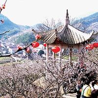 绍兴香雪梅海旅游区