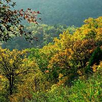九吾山国家森林公园